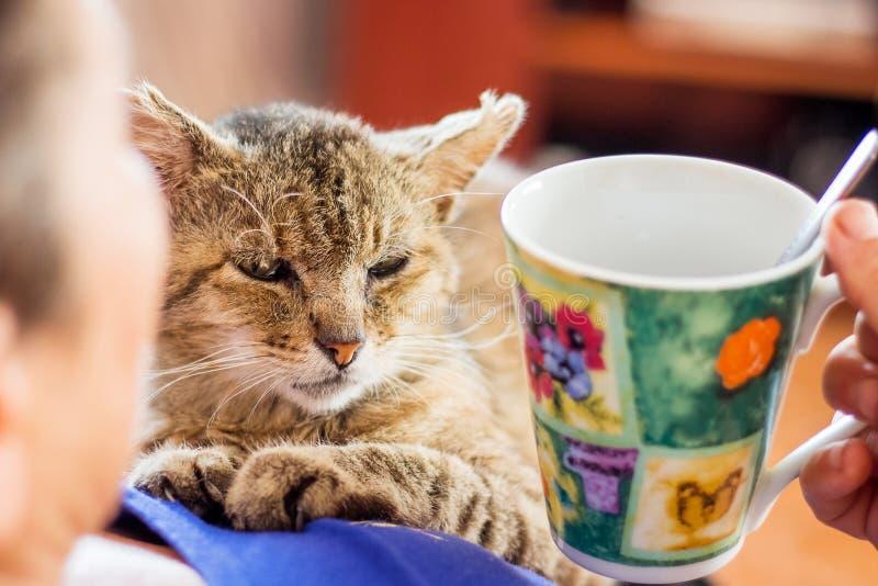 Un gato marrón viejo cerca de una mujer que bebe el tea_ imágenes de archivo libres de regalías