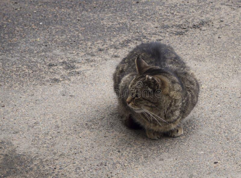 Un gato marr?n sin hogar en la calle imágenes de archivo libres de regalías