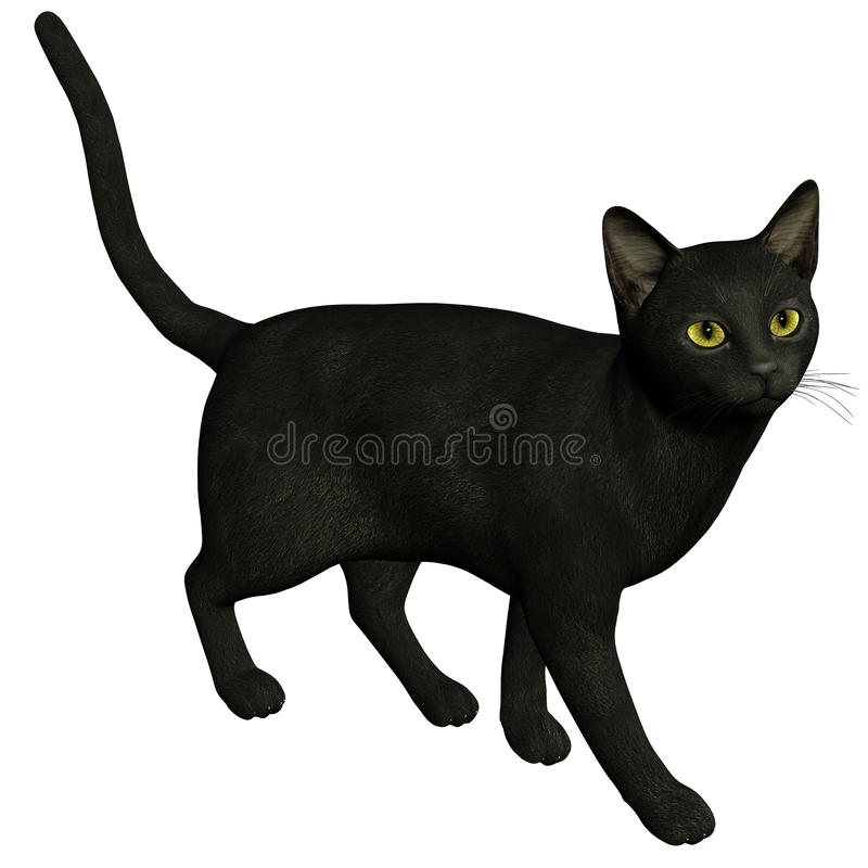Un gato negro stock de ilustración
