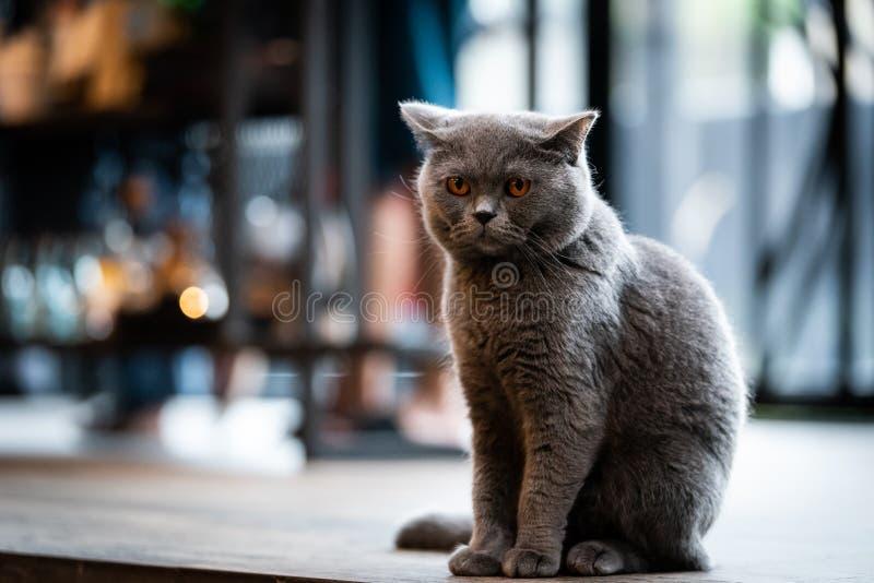 Un gato negro con los ojos amarillos por la mañana imagenes de archivo