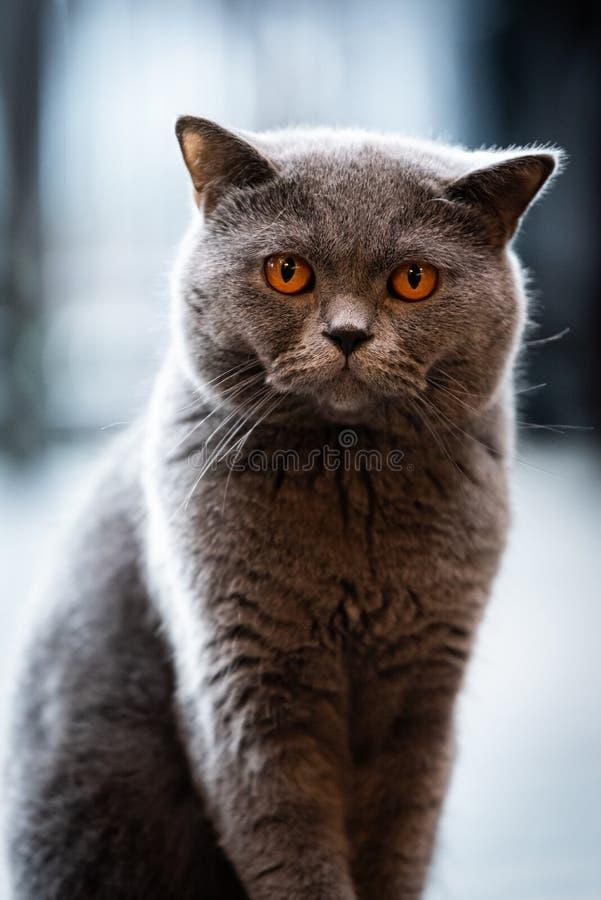 Un gato negro con los ojos amarillos por la mañana fotografía de archivo libre de regalías