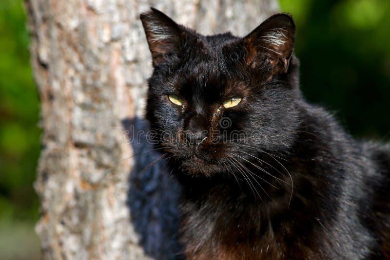 Un gato negro perdido que reflexiona su comida siguiente mientras que disfruta de la sol en Japón fotos de archivo libres de regalías