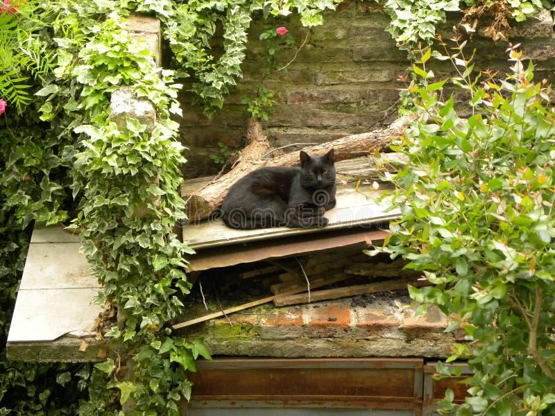 Un gato negro que descansa en el patio trasero imagen de archivo libre de regalías