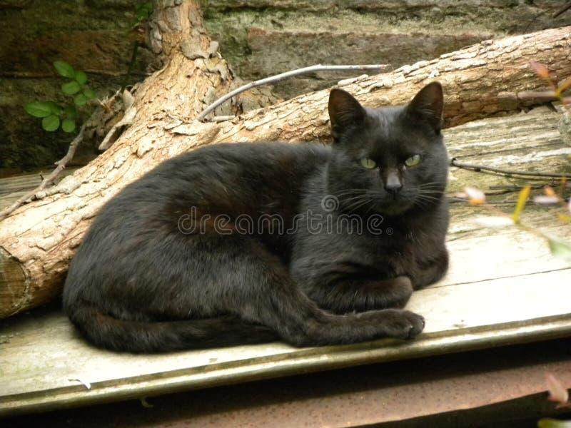 Un gato negro que descansa en el patio trasero imágenes de archivo libres de regalías