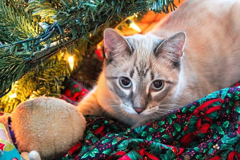 Un gato oculta en un árbol de navidad con su juguete imagen de archivo libre de regalías
