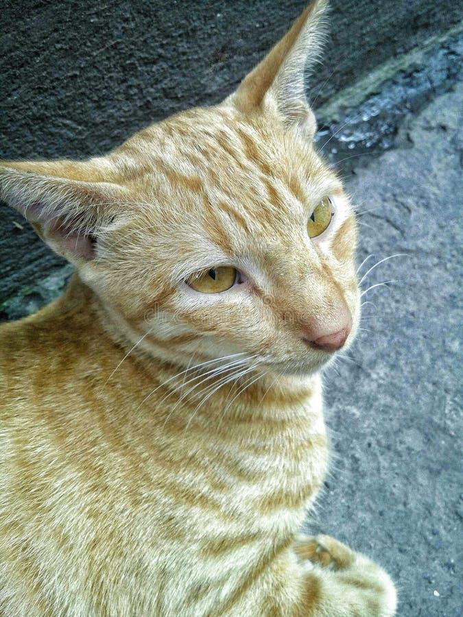 Un gato perdido anaranjado imagen de archivo libre de regalías