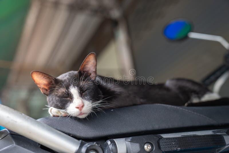 Un gato perdido blanco y negro que duerme en una moto imagenes de archivo