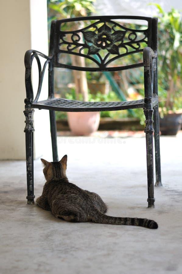 Un gato que espera a su dueño fotografía de archivo