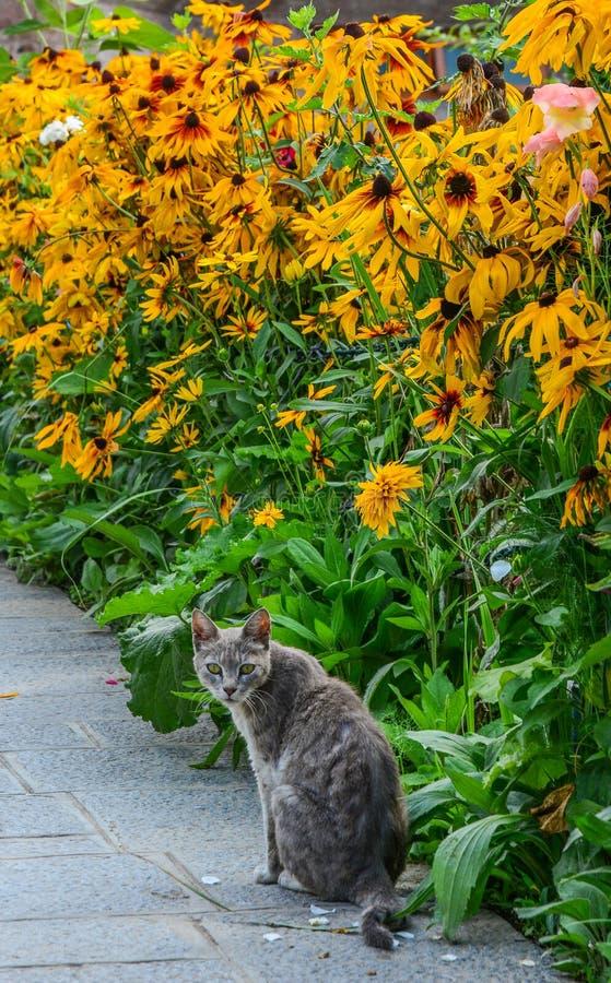 Un gato que juega en el jardín de flores de la margarita fotos de archivo libres de regalías