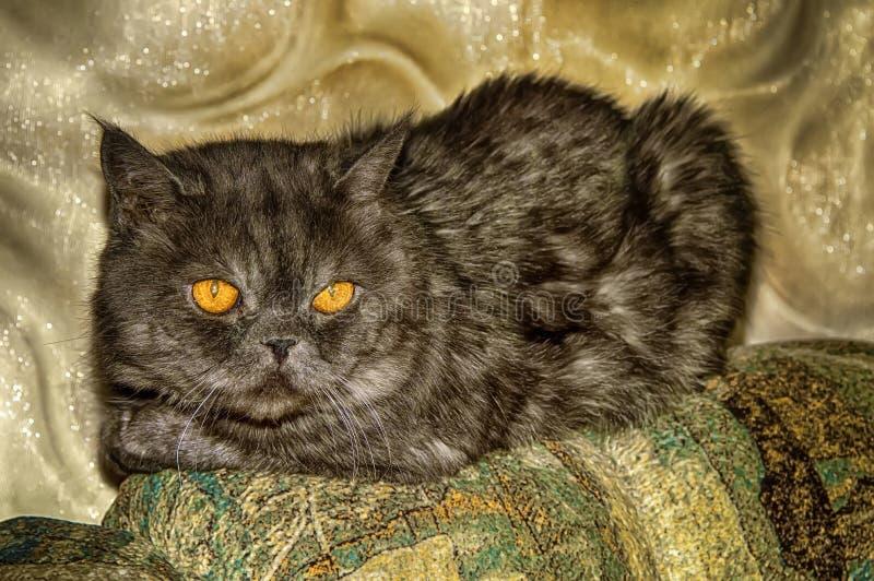 Un gato que miente en el sofá imagenes de archivo