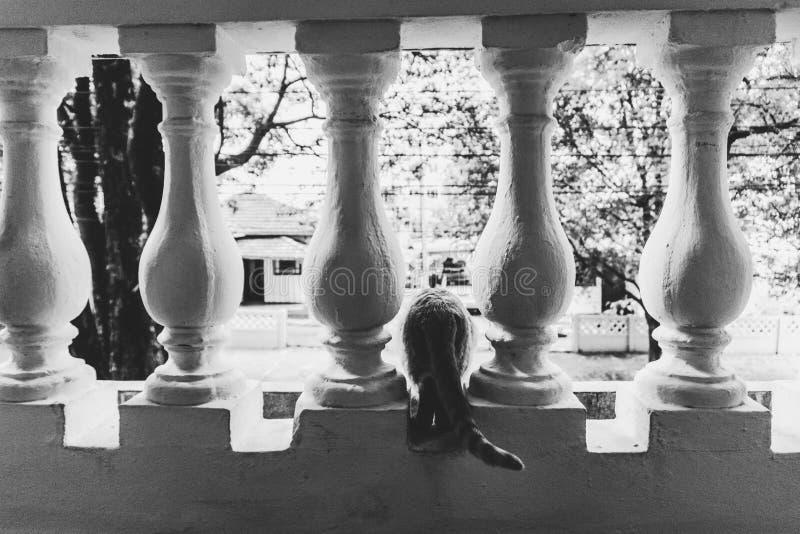 Un gato que mira la calle en un balcón fotografía de archivo