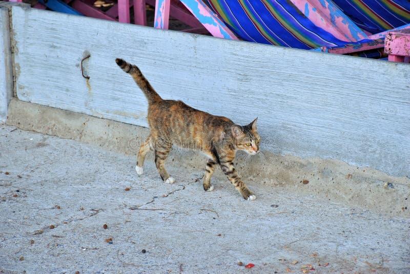 Un gato que recorre en la calle foto de archivo