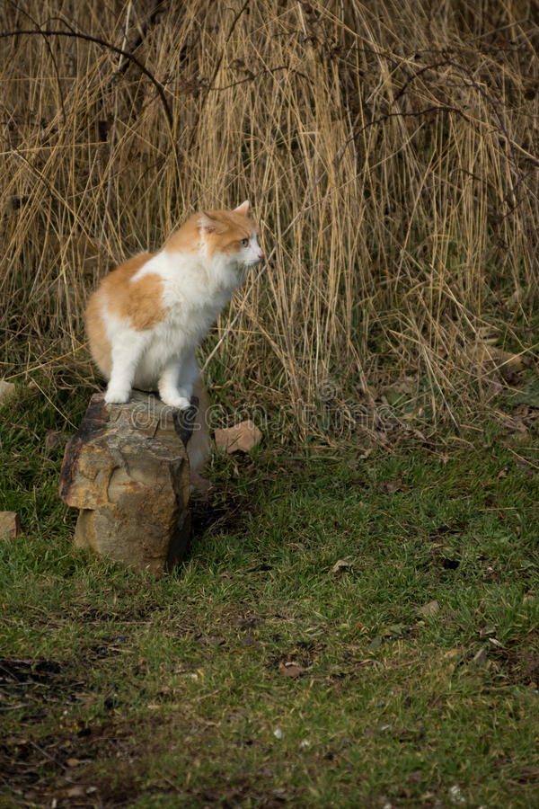 Un gato que se sienta en una piedra fotos de archivo libres de regalías