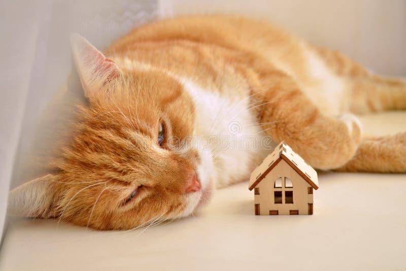 Un gato rojo miente con sus ojos cerrados en el sol en un alféizar y mira la casa de madera del juguete fotos de archivo