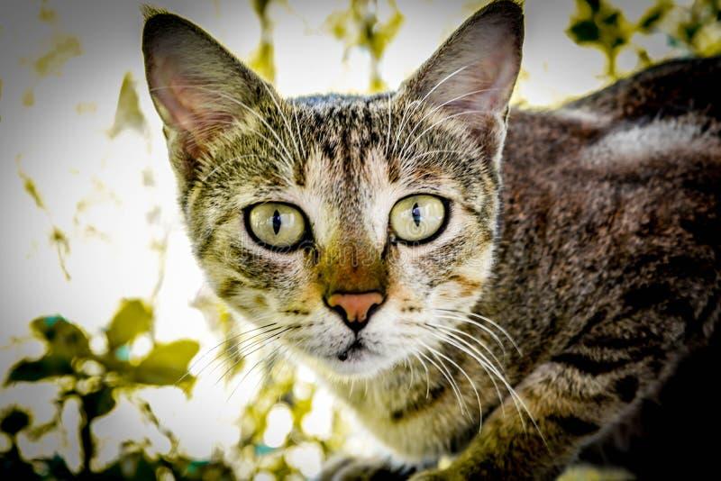 Un gato salvaje imagen de archivo libre de regalías