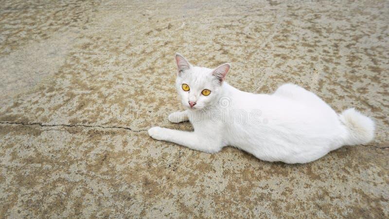 Un gato sin hogar blanco se acuesta en piso concreto imágenes de archivo libres de regalías