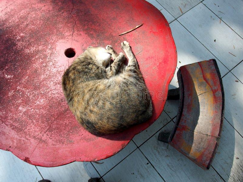 Un gato soñoliento que duerme encima de la tabla concreta roja imagen de archivo