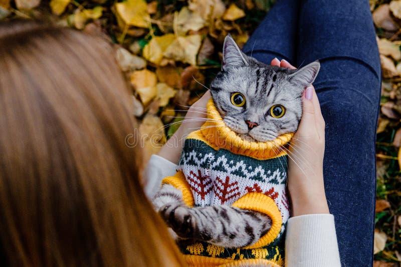 Un gato sorprendido con ojos grandes en un suéter yace en su espalda en los brazos de una chica en un parque de otoño imagen de archivo