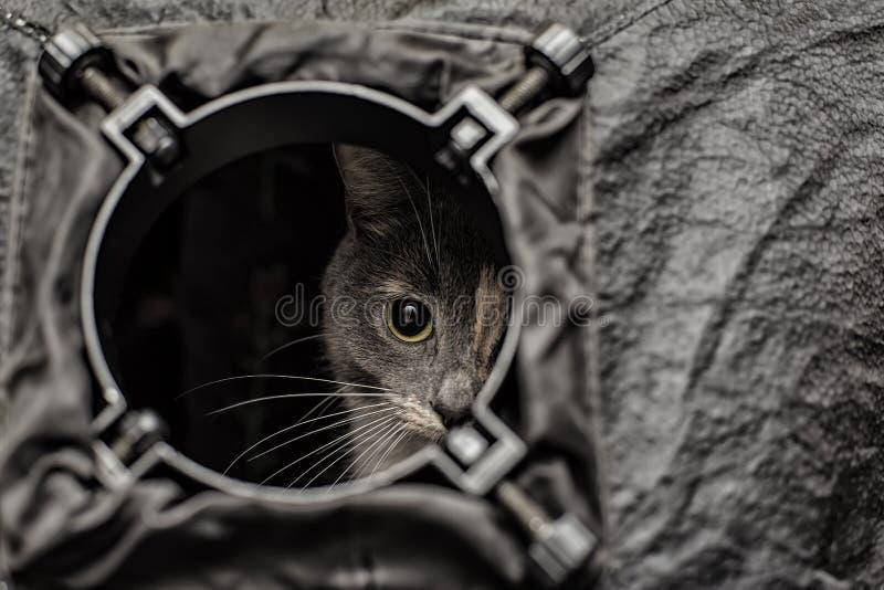 Un gato tri coloreado hermoso está espiando fuera del agujero redondo de t fotografía de archivo