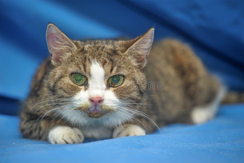 Un gato viejo fotos de archivo libres de regalías