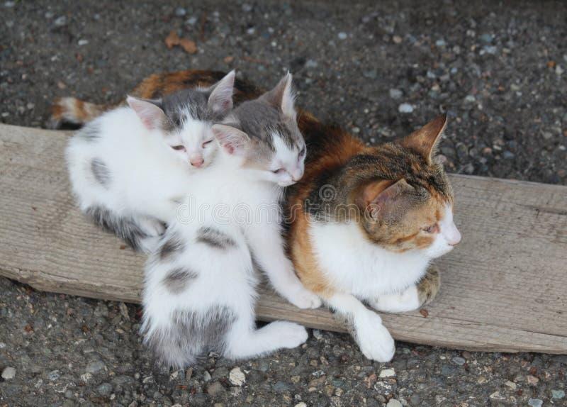 Un gato y dos gatitos que tienen resto en un pedazo de madera fotografía de archivo