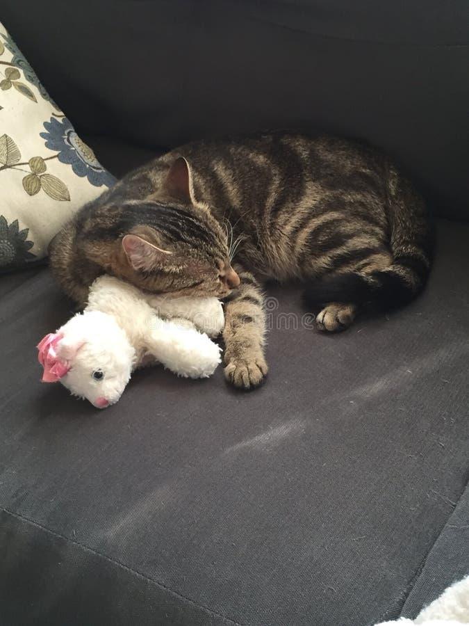 Un gato y su Kitten Plush imagen de archivo libre de regalías
