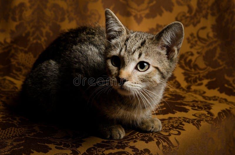Un gattino curioso e sveglio del soriano che si siede su uno strato d'annata immagine stock