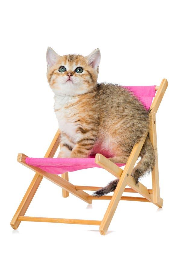 Un gattino da cortile rosso inglese su una sedia a ponte fotografie stock libere da diritti