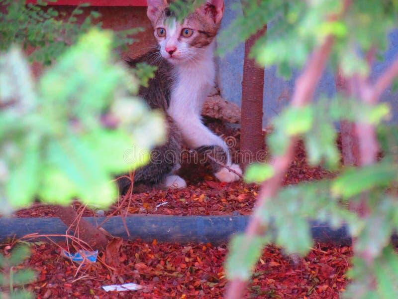Un gattino di Starey fotografia stock libera da diritti