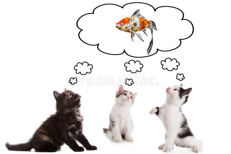 Un gattino di tre giovani che sogna del pesce fotografia stock libera da diritti