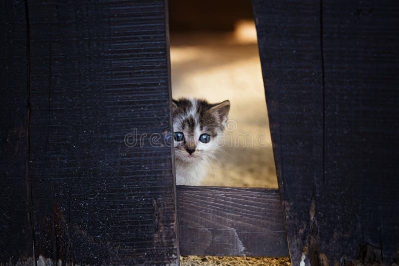 Un gattino nascosto dietro una staccionata di legno fotografie stock