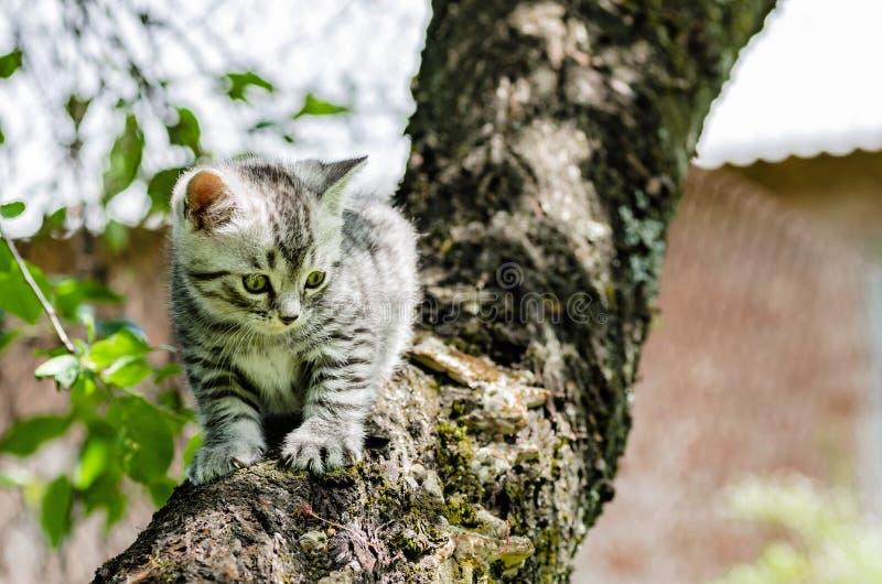 Un gattino sveglio impara intraprendere le prime azione indipendenti immagine stock libera da diritti