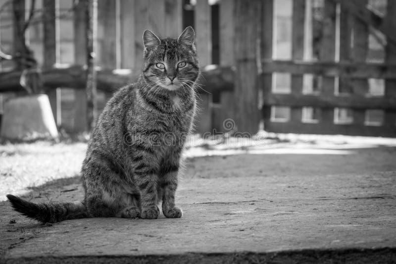 Un gatto fotografia stock libera da diritti