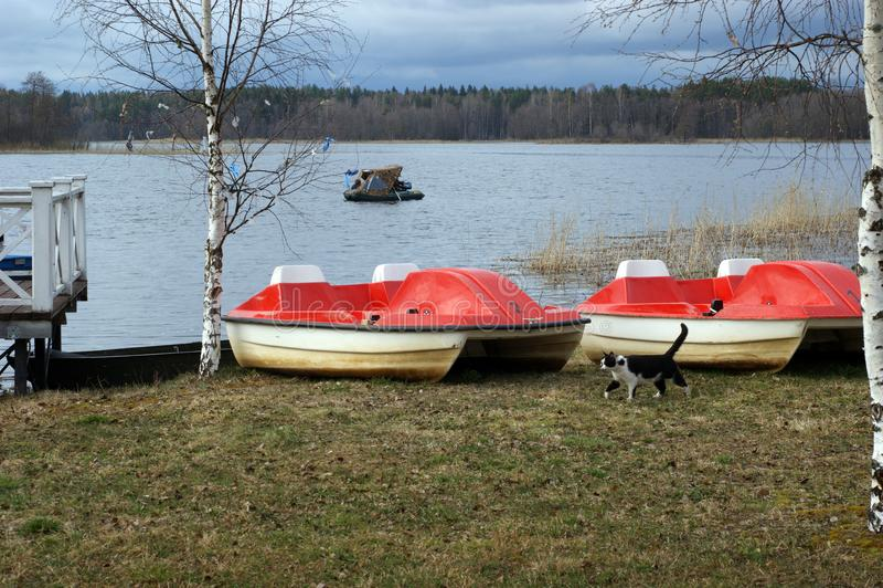 Un gatto che cammina sulla riva del lago Seliger con i catamarani fotografia stock libera da diritti