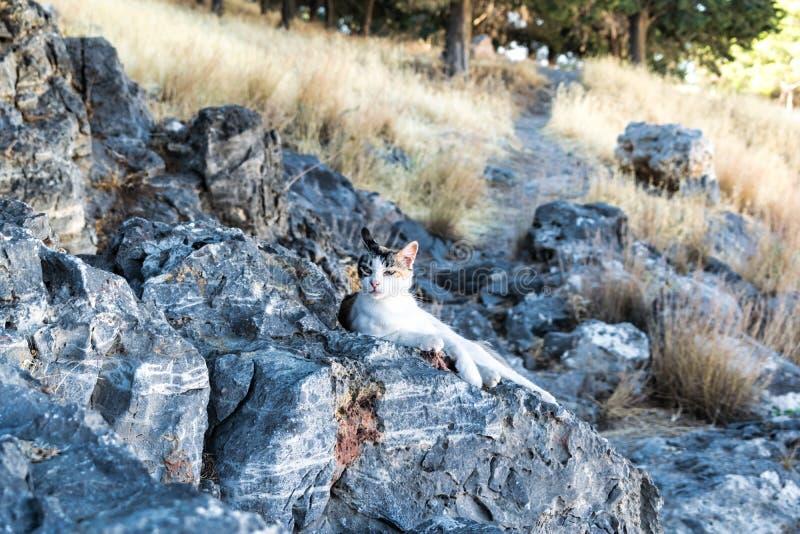 Un gatto che si rilassa su un rock-2 immagine stock