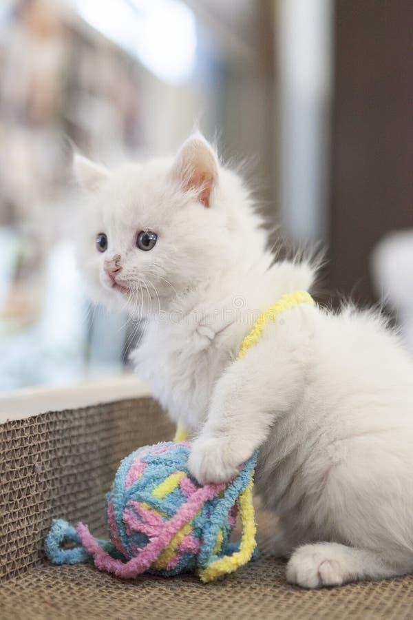 Un gatto con il suo giocattolo fotografia stock
