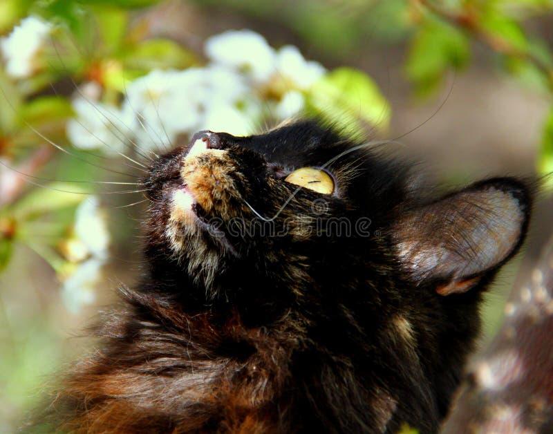 Download Un gatto curioso immagine stock. Immagine di animale - 55352019