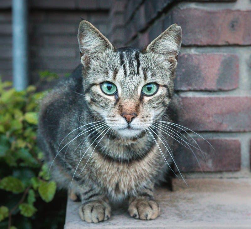 Un gatto curioso ma amichevole fotografia stock