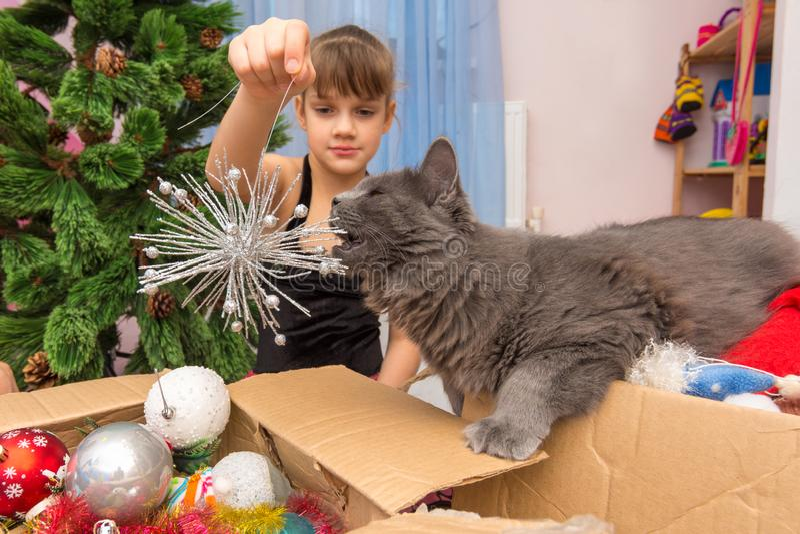 Un gatto di casa sgranocchia una decorazione dell'albero di Natale nelle mani di una ragazza fotografia stock