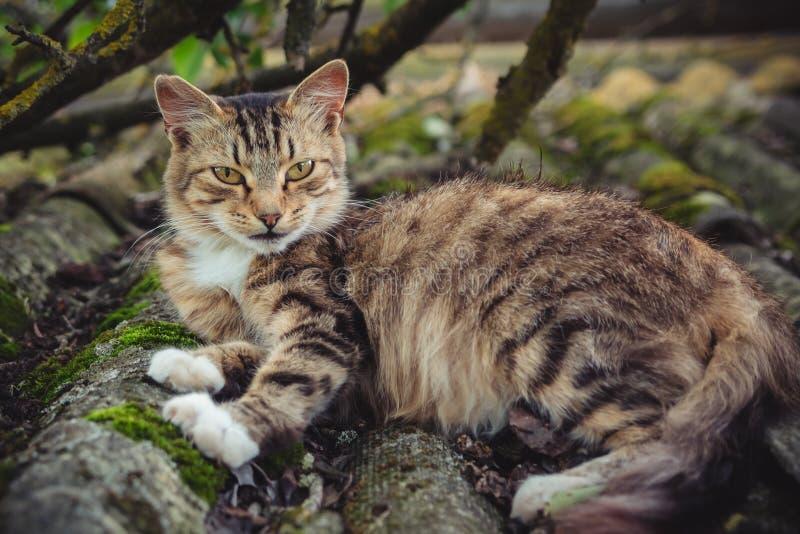 Un gatto di soriano colorato si trova su un vecchio tetto coperto di muschio fotografia stock