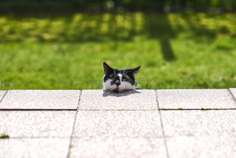 Un gatto domestico che si nasconde davanti al proprietario nel giardino sull'erba fotografie stock