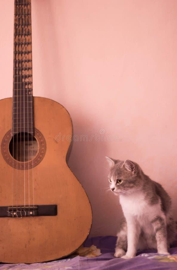 Un gatto e la chitarra fotografia stock
