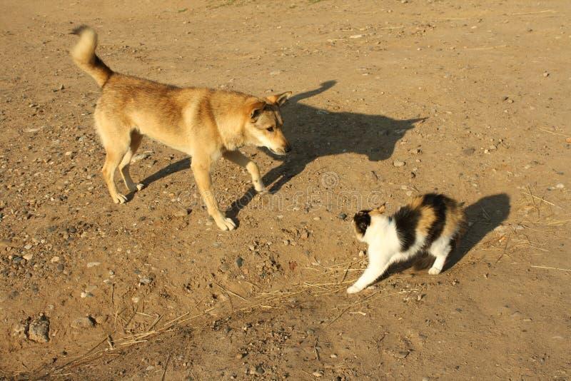 Un gatto e un cane immagini stock libere da diritti
