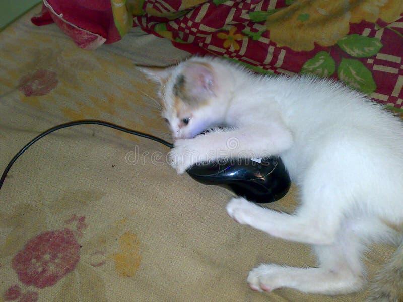 Un gatto e un topo immagini stock libere da diritti