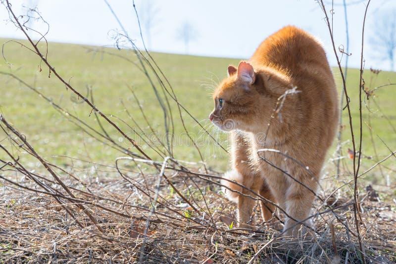 Un gatto fa una gobba e ritiene minacciato da un cane, Germania immagine stock