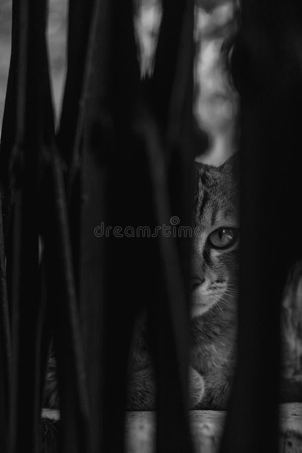 Un gatto nascosto con le sensibilità nascoste fotografia stock libera da diritti