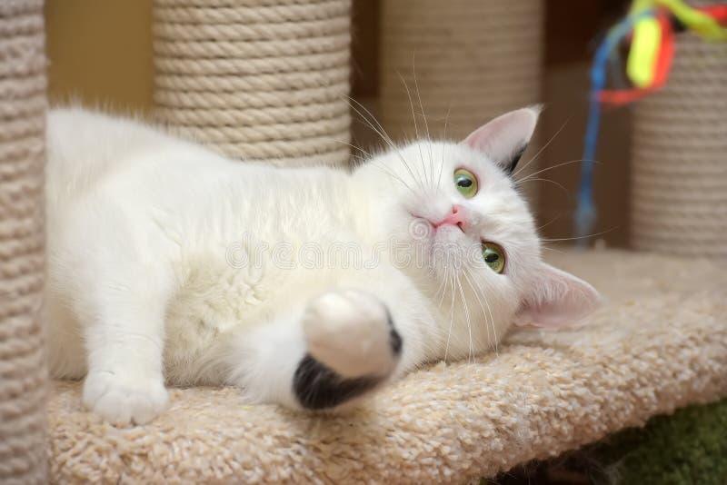Un gatto nella casa dei gatti con un raschietto fotografia stock libera da diritti