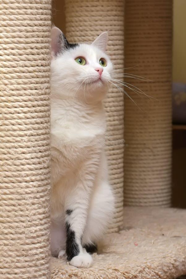 Un gatto nella casa dei gatti con un raschietto fotografia stock