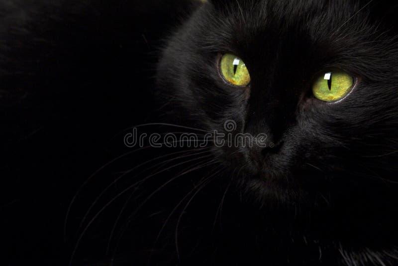Un gatto nero immagine stock