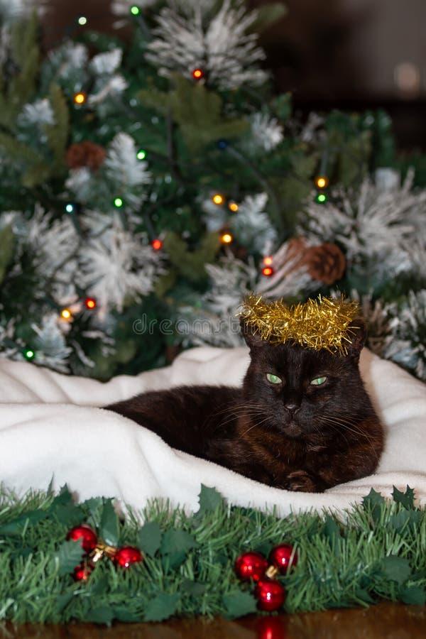Un gatto nero che indossa una corona della decorazione dorata di Natale fotografia stock libera da diritti